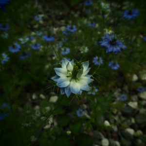 The season of flowers